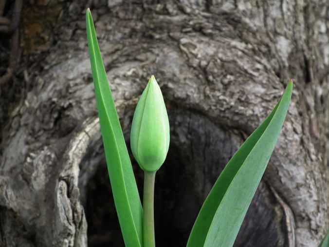 green bud leafed plant
